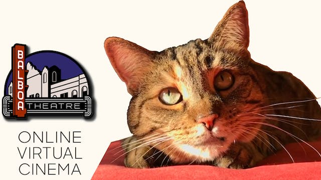Quarantine Cat Film Festival @ Balboa Theatre