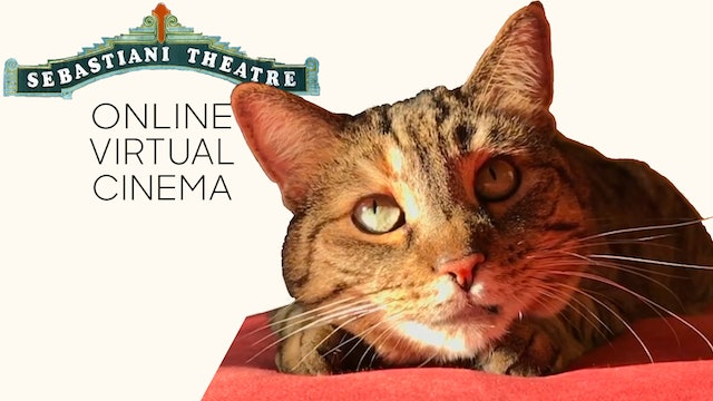 Quarantine Cat Film Fest @ The Sebastiani Theatre