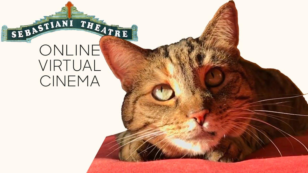 Quarantine Cat Film Fest @ The Sebastiani Theatre
