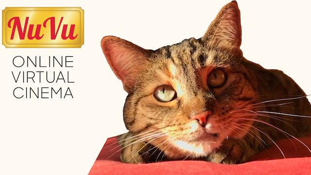 Quarantine Cat Film Festival @ NuVu Showhouse