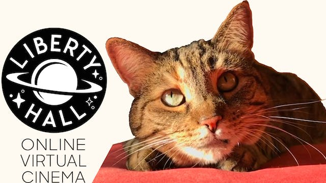 Quarantine Cat Film Festival @ Liberty Hall Cinema