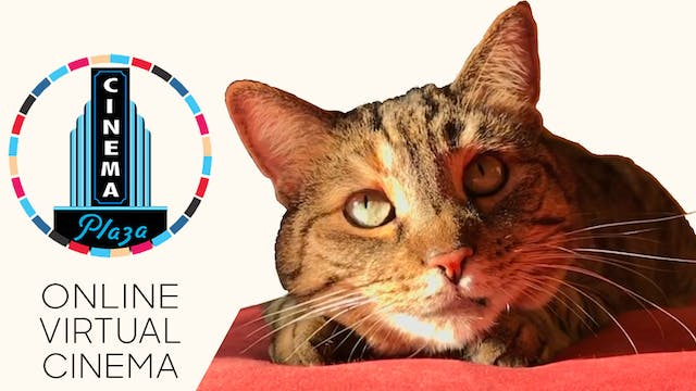 Quarantine Cat Film Festival @ Plaza Cinema