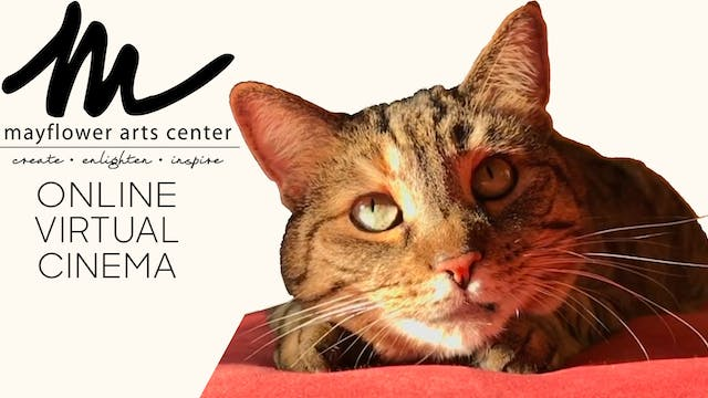 Quarantine Cat Film Fest @ Mayflower Arts Center