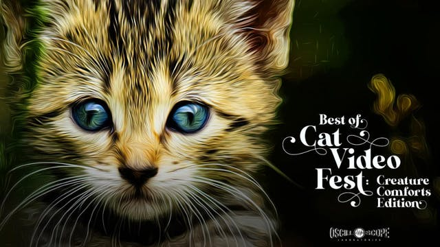 Best of CatVideoFest- Creature Comforts Edition!