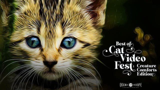 """A/perture Presents """"Best of CatVideoFest!"""""""