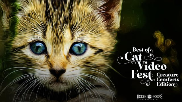 The Colonial Theatre Presents Best of CatVideoFest