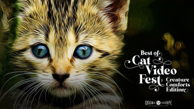 """Alamo San Antonio Presents """"Best of CatVideoFest!"""""""