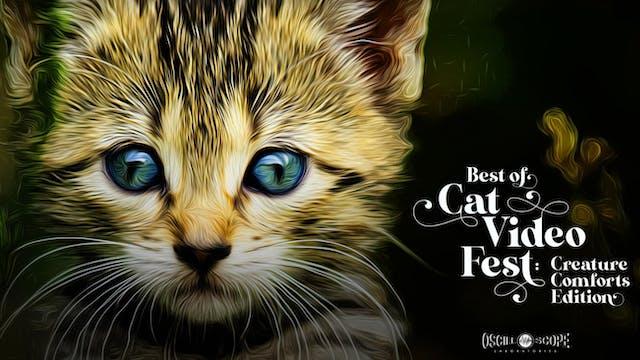 Denmark Arts Center Presents Best of CatVideoFest