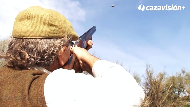 Cómo disparar a faisanes y palomas