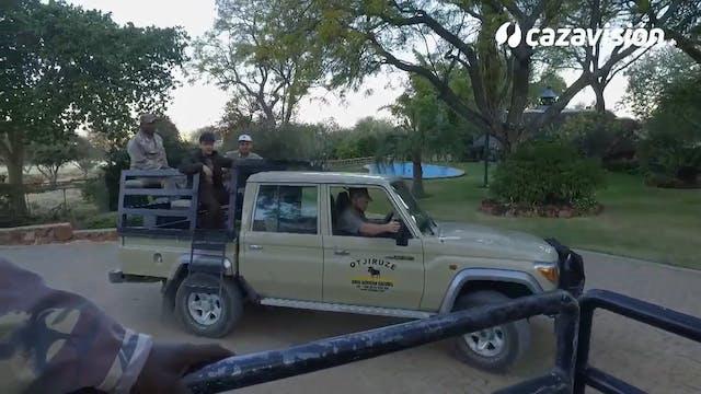 Cebras, orix y ñu en un atractivo safari