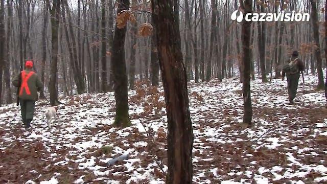 Bulgaria, paraíso de la caza de becadas