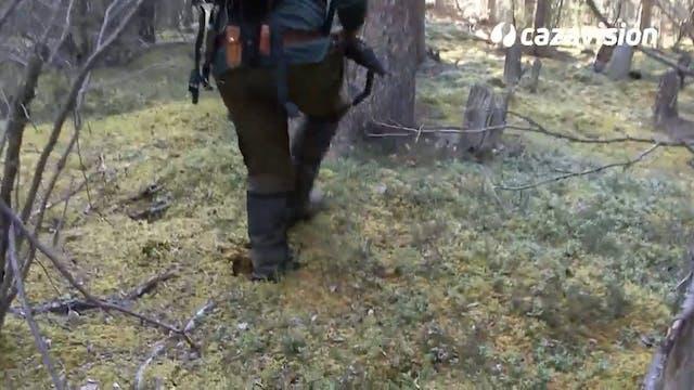 En busca de un gran oso grizzly