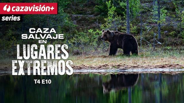 Mucha paciencia y dos viajes para cazar el oso pardo del Amur