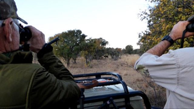 Safari de búfalo con arco