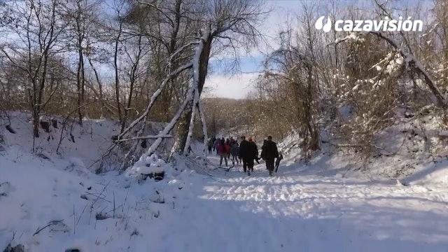 Faisanes sobre la nieve en Hungría