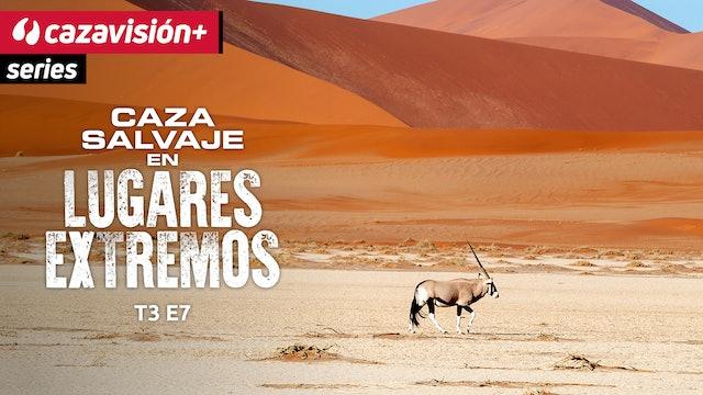 Hiena marrón y orix en el desierto de Namibia