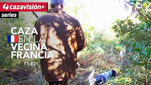 En cazaderos franceses, con buenos becaderos y sus perros