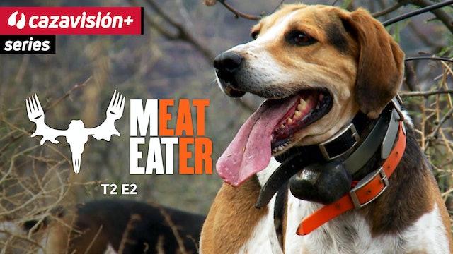 La difícil caza del puma con perros de rastro