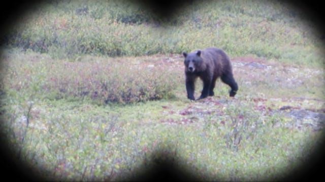 En busca de osos en Alaska, la última...