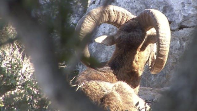 Safari Season: Grecia. Parte 1