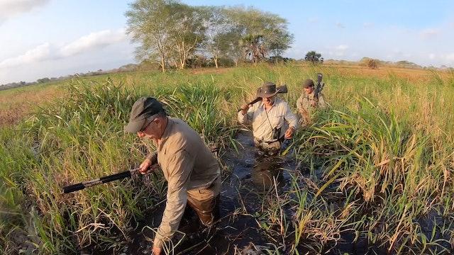 Búfalos en libertad en Mozambique