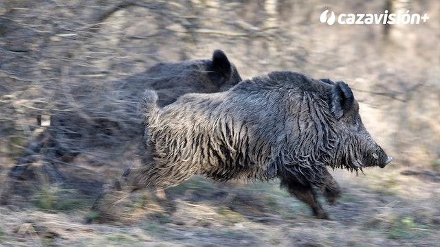 Monteando en Cabeza Parda con cazadores franceses