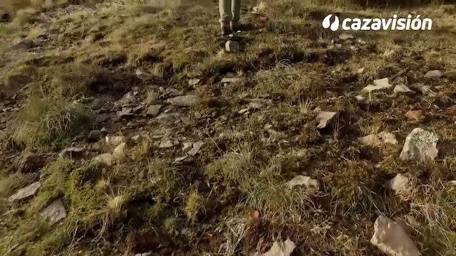 A los rebecos en la montaña búlgara