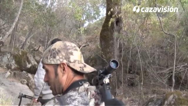 Recechando ciervos en La Vera