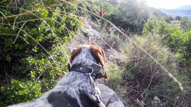 Montería en la Sierra de las Cabras