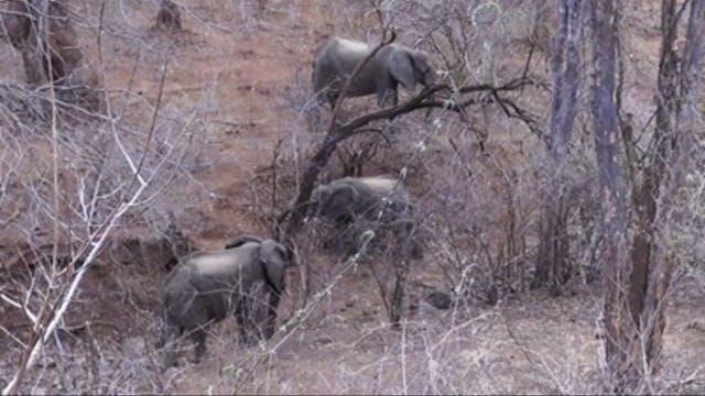 Elefante y pequeños antílopes en Zimb...