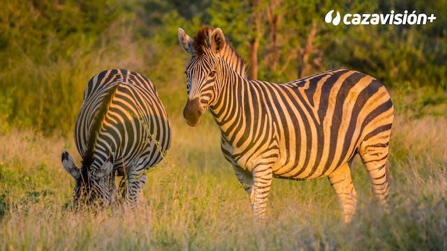Orix, cebra y caza menor en un safari...