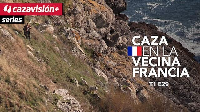 Cazadores y perros franceses, tras liebres, becadas y perdices