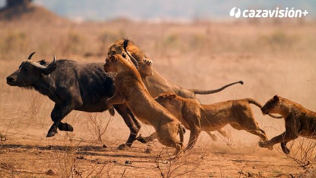 Safaris de fauna peligrosa
