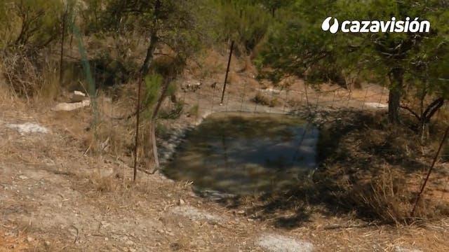 Pasión por la tórtola en Aragón