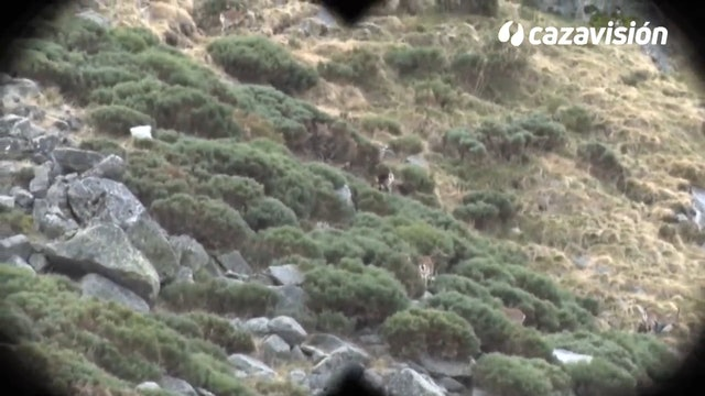 Recechando cabras con Jóvenes Monteros