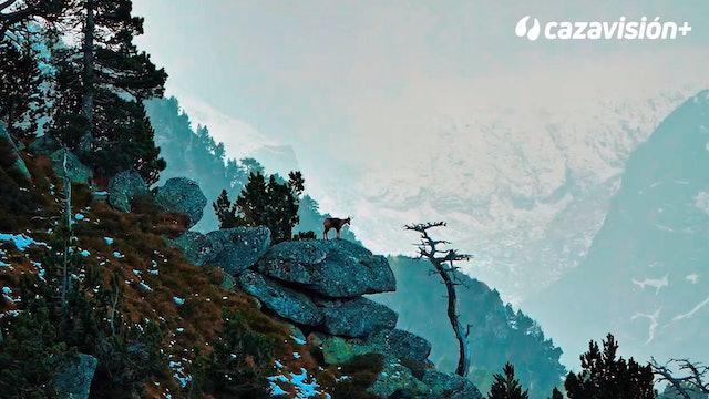 Rebeco en el Pirineo