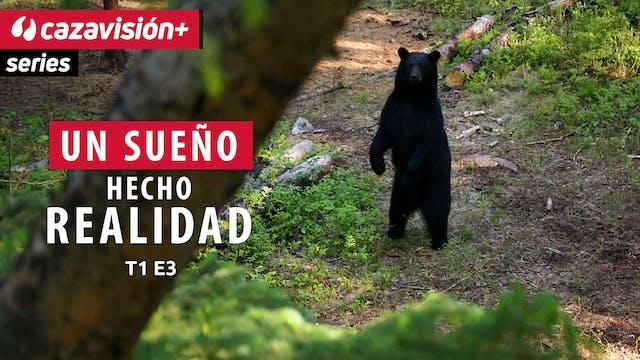 El Gran oso Negro de Canadá