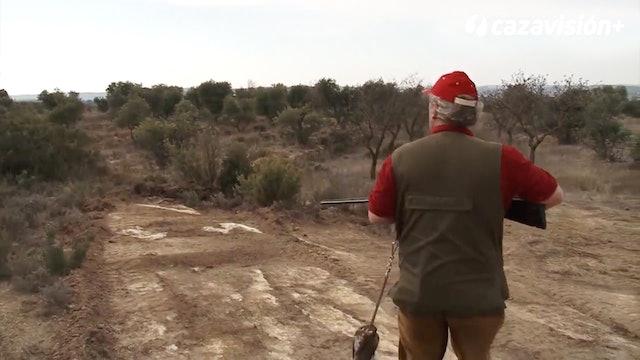 Técnicas de tiro a los zorzales
