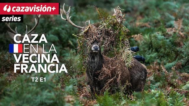 La vida íntima de la caza mayor, a través de cámaras de fototrampeo