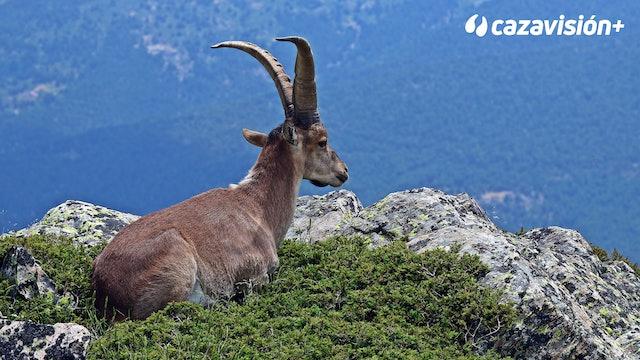 Cabra hispánica y perdiz roja, turismo cinegético