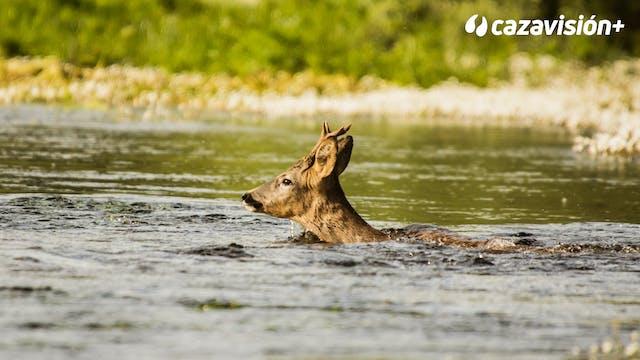 Rececho en la tierra del agua