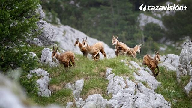 Sarrios, gestión y caza en Freser Setcases