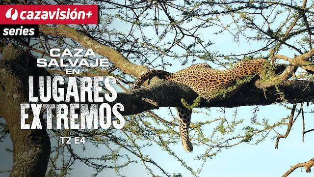 Cazadores al servicio de la conservación del jaguar en Paraguay
