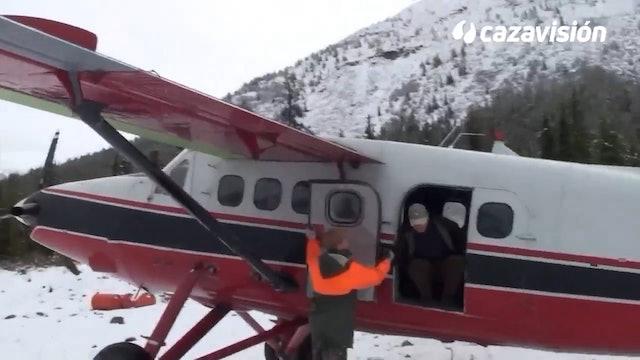 Elk y bisonte americano en tierra de grizzlie