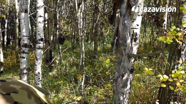 Tras elk y oso negro en Canadá