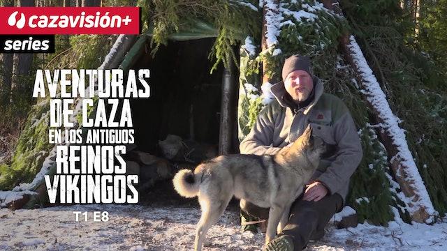 Acoso y caza de alces junto a un perro nórdico especialista
