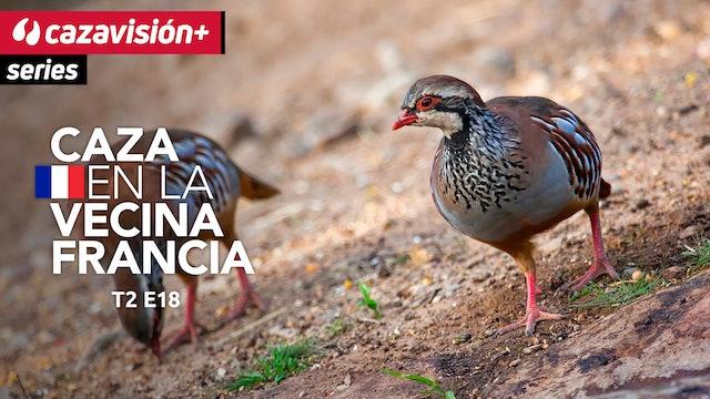 Caza de palomas y perdices en tierras argentinas. Parte 2