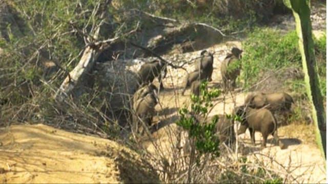 Elefante y bushbuck en Zimbabwe