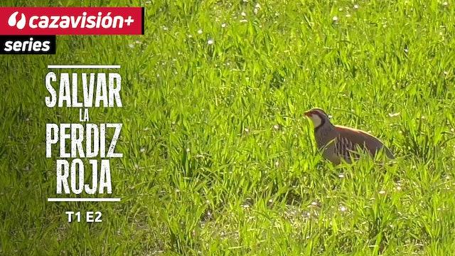 PROYECTO: Salvar la perdiz roja. Biología y preparación del hábitat