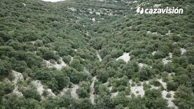 Muflones a rececho en el Levante español